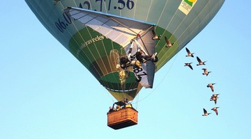montgolfiere-oiseaux-15