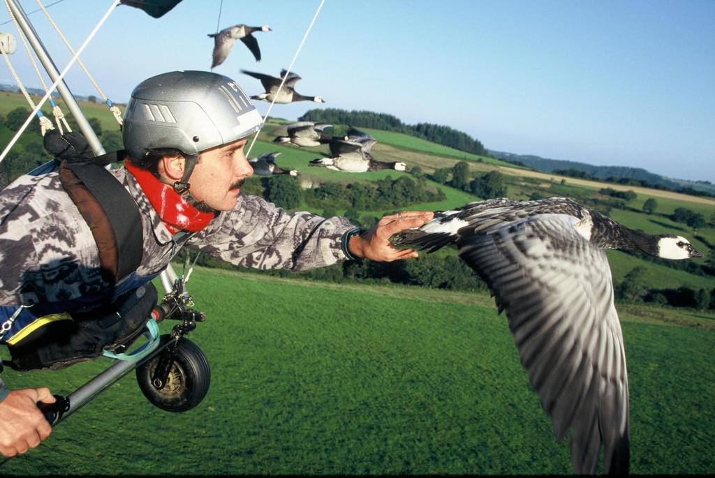 Vole vole petit oiseau