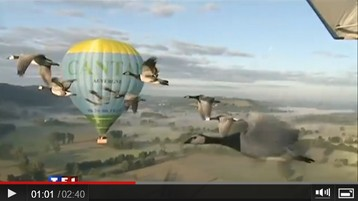 Voler comme un oiseaux