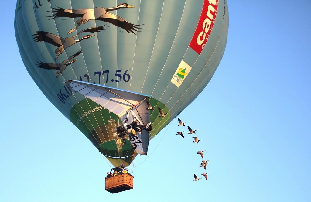 Vol en montgolfière avec oiseaux