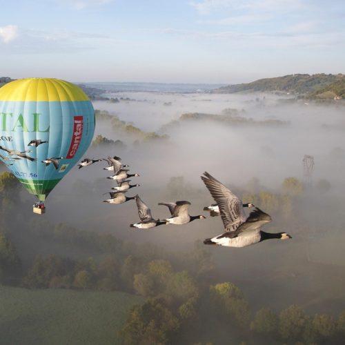 vol-montgolfiere-oiseaux-4