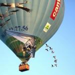 vol-montgolfiere-oiseaux-2
