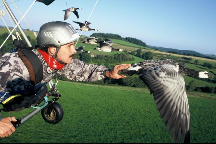 Christian Moullec, l'homme qui vole avec les oiseaux