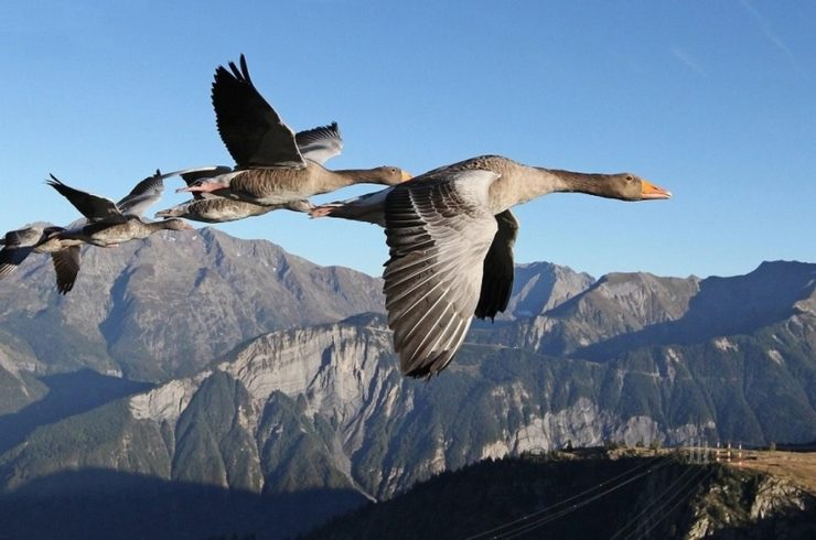 Le Bird man Christian Moullec. Stunning Video Shows a Man Flying With Birds.