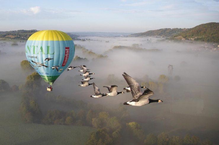 Vol en mongolfière avec des oiseaux